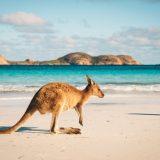 ENEL- À la conquête de l'Australie