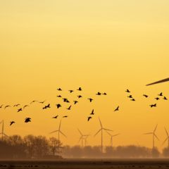 Hérault — Les pales d'éoliennes tuent des oiseaux protégés, FNE assigne EDF en justice