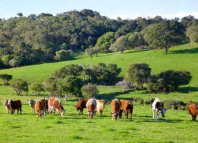 ABCD Agency : les viandes ovines et bovines sont accusées de ne pas être écologiques