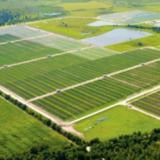 EDF Renouvelables va développer cinq centrales solaires en Floride