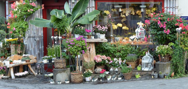 Chambre froide positive pour fleuriste