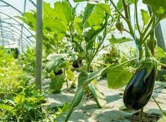 L'industrialisation du bio boudée par la FNAB et la Confédération paysanne