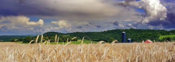 Weenat – Une application dédiée aux agriculteurs