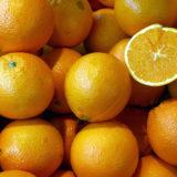 Des gobelets fabriqués avec des pelures d'oranges