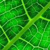 Production de gaz propre par photosynthèse d'une feuille artificielle